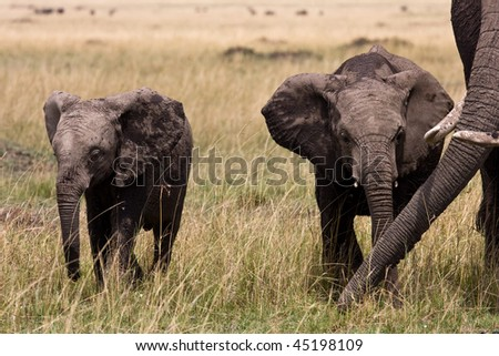 two young elephants and its mama