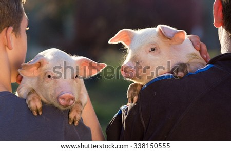 Two young farmers holding cute piglets on their shoulder - stock photo