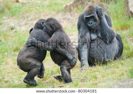 Two young gorillas dancing while the mother is watching - stock photo