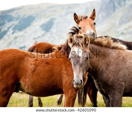 two young horses looking at camera in the mountains
