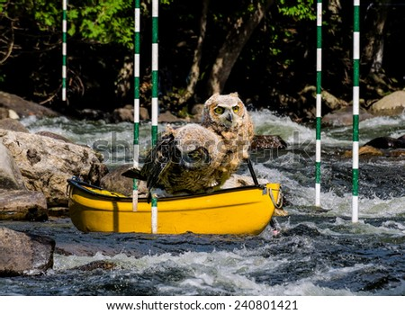Two young owls in a canoe - stock photo