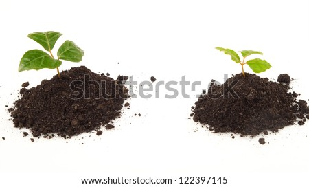 two young plants with green leaves on soil - stock photo