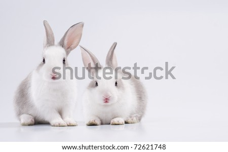 two young rabbit looking the camera with copy space - stock photo