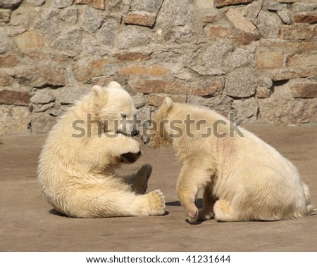 Two young white bears in zoo