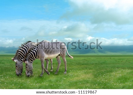 Two zebras on a background of a beautiful landscape - stock photo