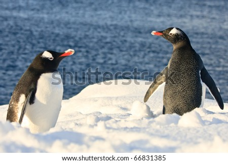 twol penguins resting on the coast of Antarctica - stock photo