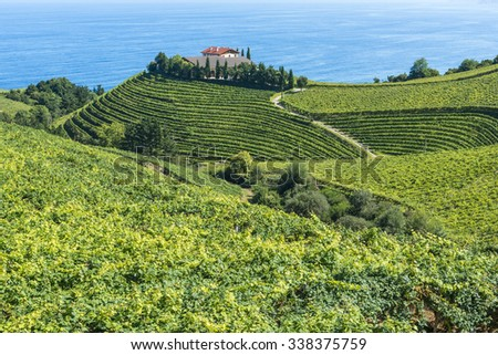 Txakoli Vineyards and wine cellar, the Cantabrian sea in the background, Getaria (Spain) - stock photo