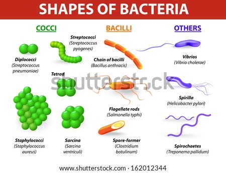 Types Bacteria Bacteria Classified Into 5 Stock Illustration