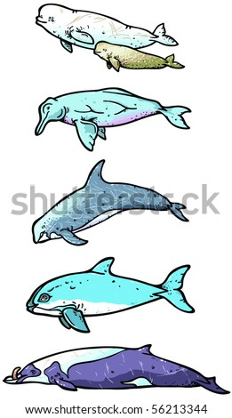 Types of whales illustration - stock photo