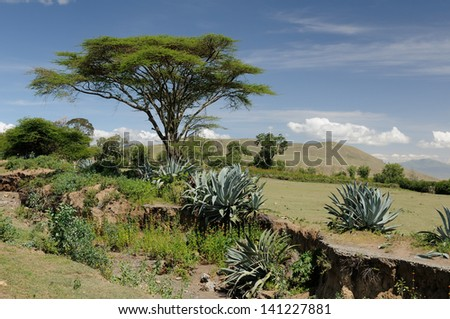 Typical african landscape - stock photo