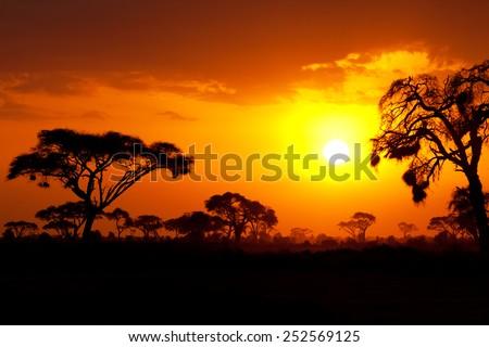 Typical african sunset with acacia trees in Masai Mara, Kenya - stock photo