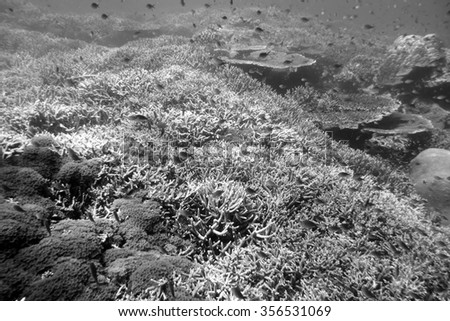Typical coral reefs newly formed at dive sites around tropical ocean - stock photo