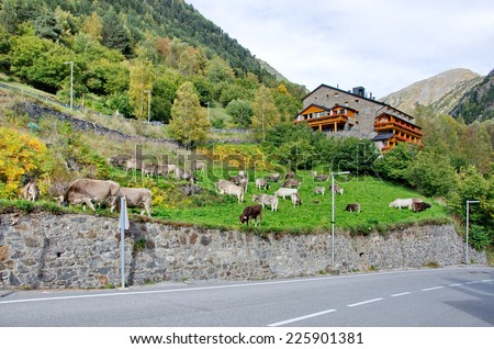 Typical dark brick Andorra house with  cows grazing on the grass in the tiny village of El Sarrat in the Pyrenees Mountains - stock photo