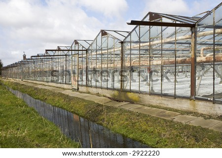 Typical Dutch glass plant nurseries growing violets.