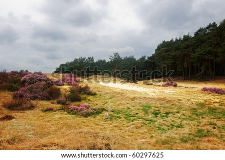Typical dutch heathland (with typical dutch weather) - stock photo