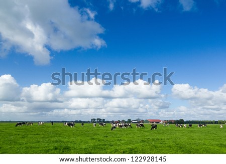 Typical dutch landscape with cows in the flat pastures - stock photo