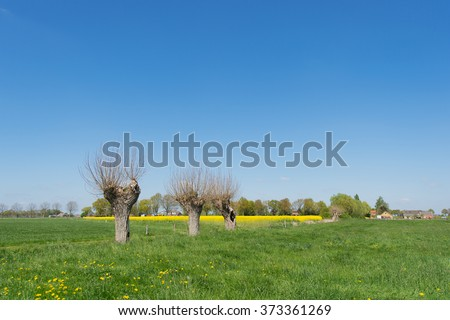 Typical Dutch landscape with pollard willows - stock photo