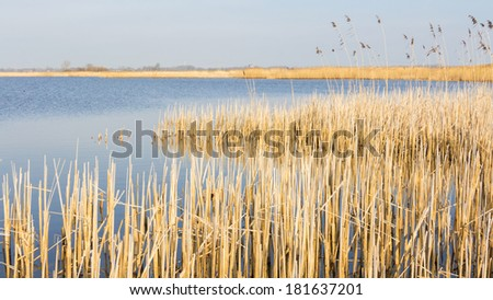 Typical Dutch landscape with thatch growing in the water - stock photo