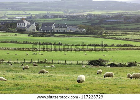 Typical Irish rural landscape: sheep, traditional houses, grasslands, forests and rolling hills. - stock photo