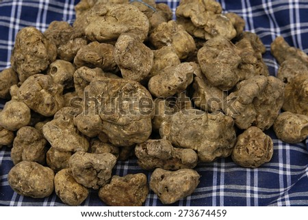 typical italian food: white and black truffles - stock photo