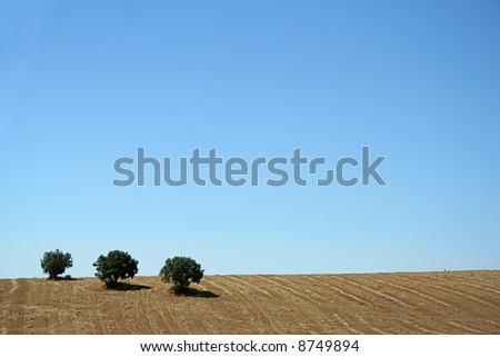 typical landscape from alentejo portugal - three trees - stock photo