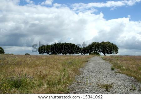 typical landscape in alentejo, portugal - stock photo