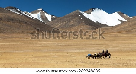 Typical Landscape in Rupshu valley with yaks caravan, Ladakh, Jammu and Kashmir, India - stock photo