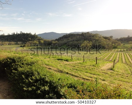 Typical Napa Valley vineyard view at sunset - stock photo