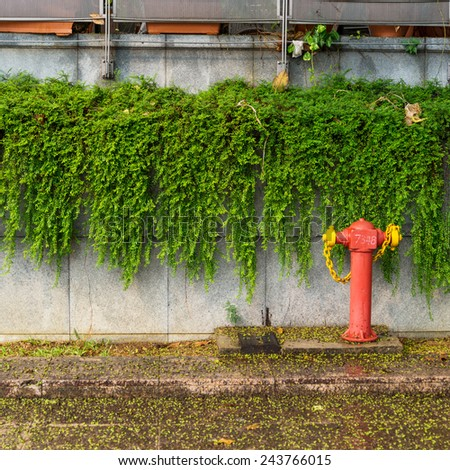 Typical red fire hydrant green leaf and foot wall background - stock photo