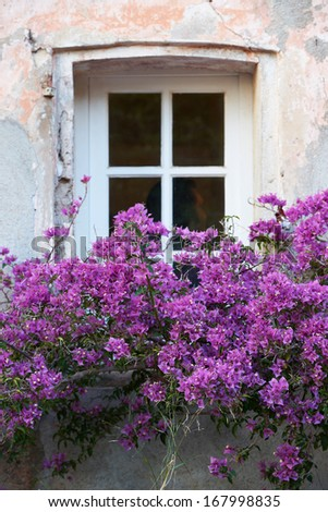 Typical Saint Tropez window with flowers in winter season - stock photo