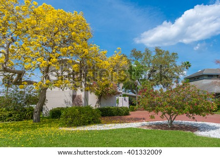 Typical Southwest Florida Concrete Block and Stucco Home with a huge yellow Tabebuia tree in the side yard in Springtime.  - stock photo