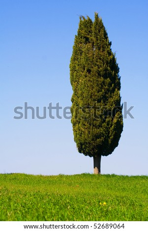 Typical Tuscany (Val d' Orcia) landscape with blue sky, rolled hills and cypress.