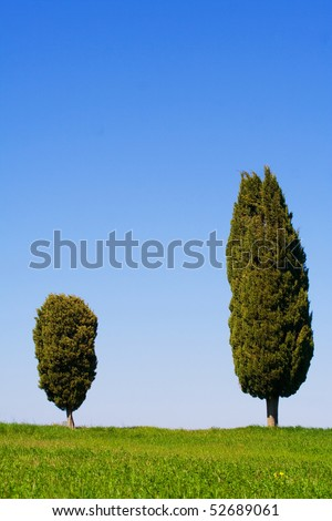 Typical Tuscany (Val d' Orcia) landscape with blue sky, rolled hills and two cypress.