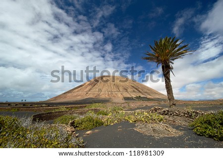 Typical volcano-agricultural landscape of the Lanzarote, Canary Islands, Spain. Black volcanic soil, malvasia vines, Date Palm (Phoenix canariensis), figs and prickly pears. Mancha Blanca village. - stock photo