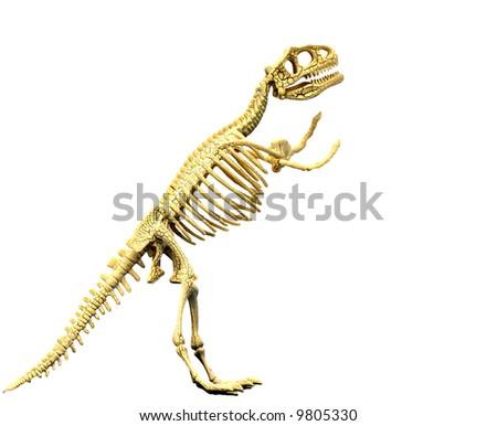 Tyrannosaurus rex dinosaur skeleton - stock photo