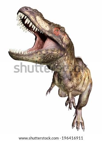 Tyrannosaurus Rex isolated on white background Computer generated 3D illustration - stock photo
