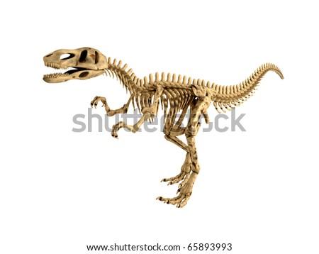Tyrannosaurus Rex Skeleton isolated on white - stock photo