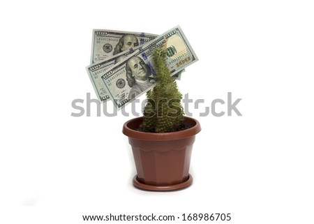 U.S. dollar on the living flower. Photo.