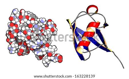 Ubiquitin protein molecule. Ubiquitin is a molecular tag that indicates proteins marked for recycling. Left: atoms as conventionally colored spheres. Right: cartoon model with secondary structure. - stock photo