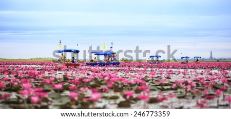 Udon Thani,Thailand - December 5,2014 : Thai tourist take boat visiting sea of red water lily festival at Nonghan lake in Udon Thani,Thailand. - stock photo