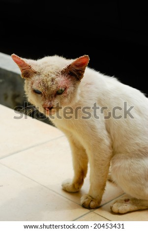 Ugly cat with skin disease and different colored eyes - stock photo