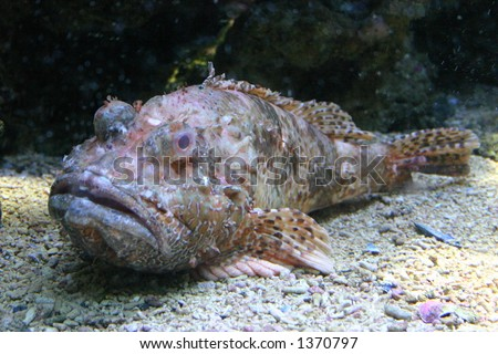 Ugly fish stock images royalty free images vectors for Ugly fish pictures