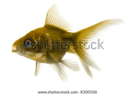 ugly fish on white - stock photo