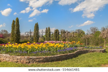 UKRAINE, BELAYA TSERKOV - APRIL 18, 2016: Coniferetum (conifers growing portion) with spring flowers blooming in the dendropark Alexandria Bila Tserkva, Ukraine