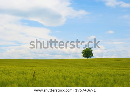 ukrugloy green tree shape on a green field against the sky - stock photo
