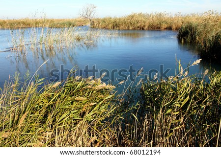Ullal de Baldovi wetland  in La Albufera nature reserve Valencia province Spain - stock photo