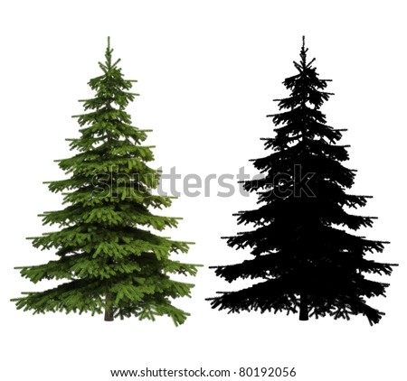 Ultra detailed Picea spruce tree with silhouette included, isolated on a white background , 300 D.P.I image - stock photo