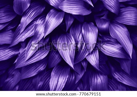 Ultra Violet background made of fresh green leaves. Green dynamic backdrop for your design.