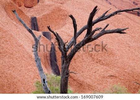Uluru - Ayers Rock. Aboriginal sacred place. UNESO world heritage. Red sandstone rock closeup with day changing color painting. - stock photo