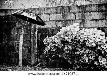 umbrella in the rain with plants and a brick wall - stock photo